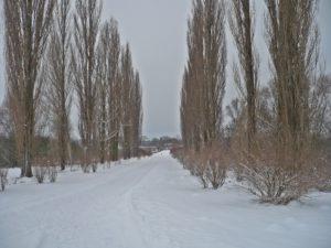 Camino del crematorio