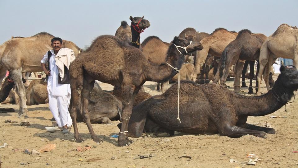 Expedición por el norte – Matinal en Pushkar y Jaipur